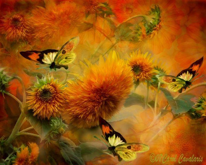 Image du Blog cequejaimesurlenet.centerblog.net